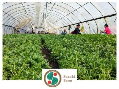 Suzuki Farms japanese produce delaware